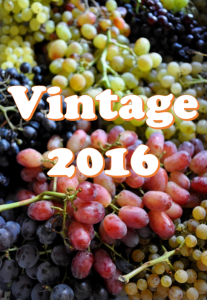 Vintage 2016 table grape mix
