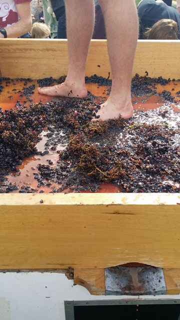 Barossa Vintage Festival Grape Stomping Results 2015