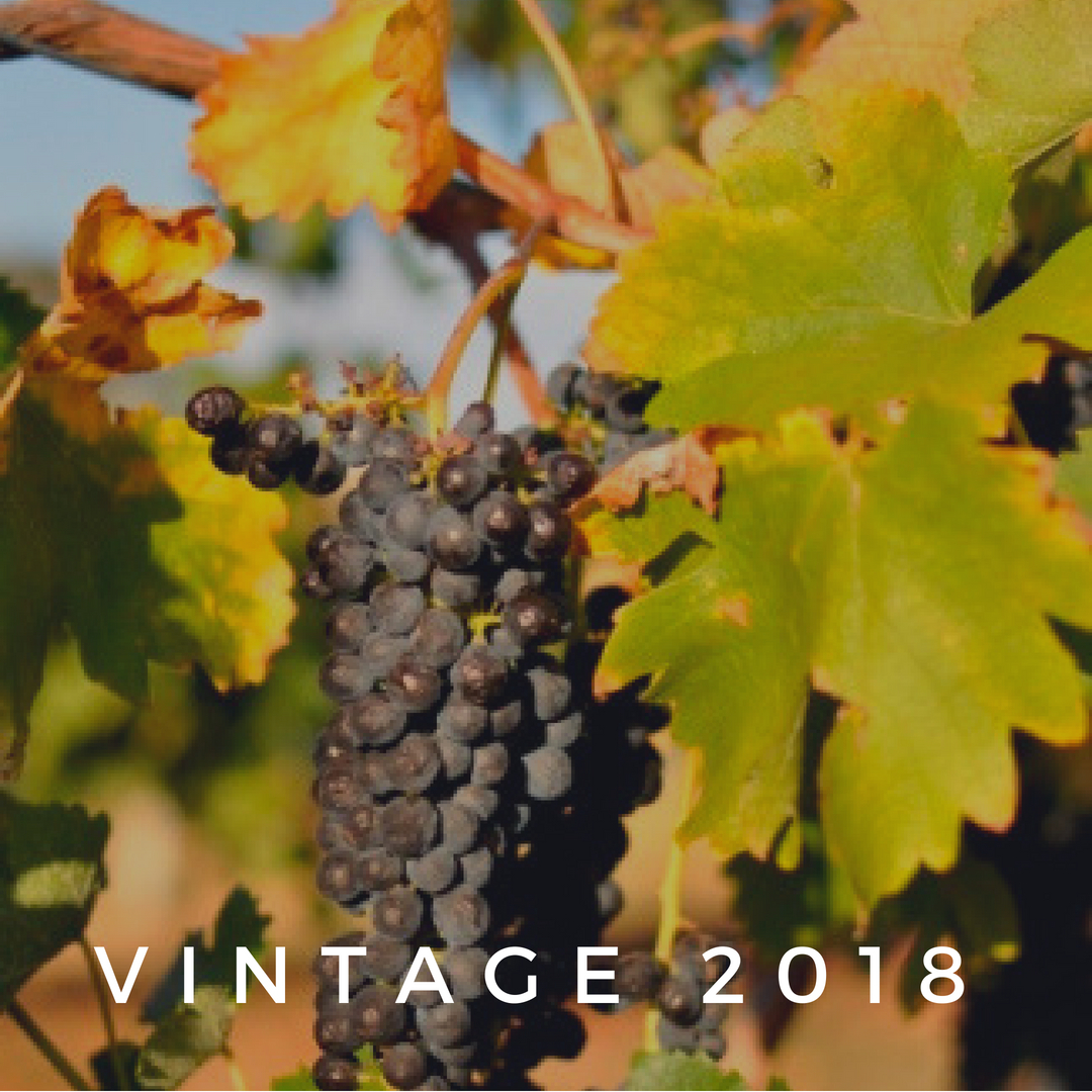 Barossa Vintage Report 2018